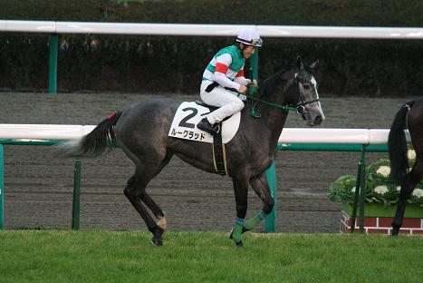 13-返し馬.JPG
