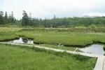 14-20090705_神仙沼.JPG
