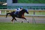 スカーレット-レース2.JPG