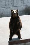 K-20090705_熊牧場1.JPG