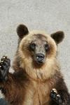 K-20090705_熊牧場4.JPG